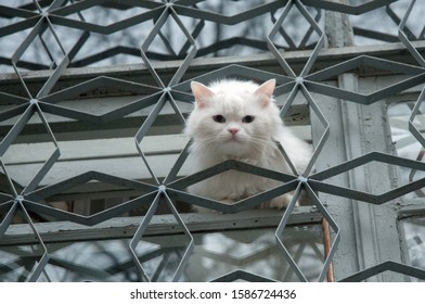 Cute white cat peeks out of the window. A fluffy cat stuck its head out of the fence and looks out into the street. Funny animals.