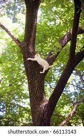 Cute white cat stranded in a tree