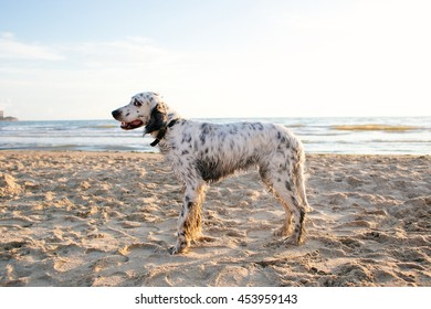Cute white dog standing on the background of the ocean and looking at the camera suspiciously