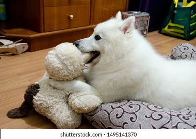 Cute White Furry Dog Japanese Spitz
