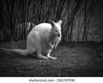 Cute white kangoo