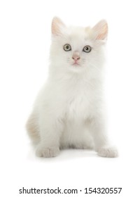 cute white kitten isolated over white background
