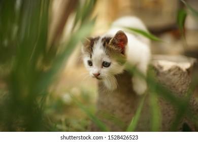 cute white kitten play or hunting in the garden, cat hunter