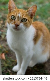 Cute white and orange cat sitting on the ground outside