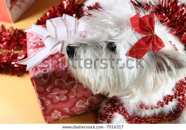 Cute white puppy with present and snowflakes.