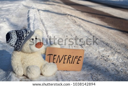 Cute white teddy bear is sitting on the snowy roadside at sunny frosty winter day. It wants to get to south warm country using hitchhiking method.