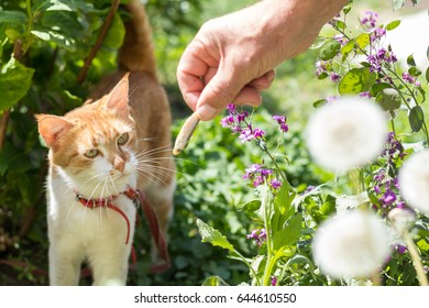 Cute white-red cat in a red collar watching for something on the garden of green grass