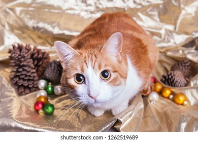 Cute wide eyed orange and white Christmas kitty surrounded by pine cones Christmas color mini ornament