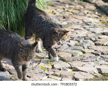 The cute wild cats in the garden with the warm sunlight