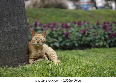 cute yellow cat in Kenedy Park in Lima