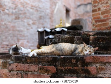 Cute yellow cat relax on grunge brick floor in temple historical  Ayuttha,Thailand