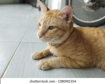 Cute yellow cat sitting at the tile floor in the house