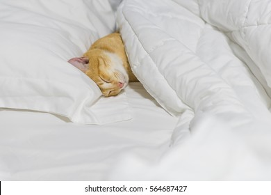 A cute yellow cat sleep on white cozy bed