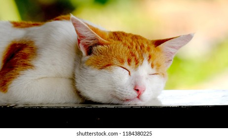Cute yellow cat, sleeping peacefully, happily, it's like there is no problem in his life at all