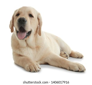 Cute yellow labrador retriever puppy isolated on white