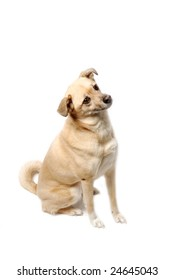 cute yellow mixed breed dog - isolated on white background