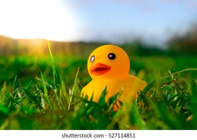 Cute yellow rubber duck isolated over grass background