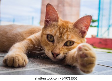 Cute yellow stripe cat laying on the floor and pointing her paw to the camera