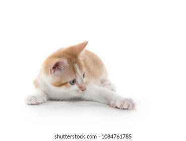 cute yellow and white kitten isolated on white background