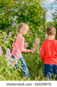 Cute young boy and girl standing outdoors amongst the bushes collecting a bunch of fresh purple lilac flowers for their mother as a gift