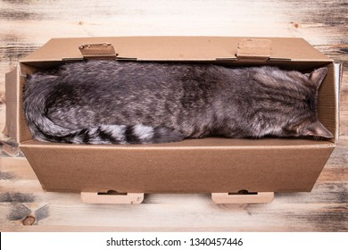 Cute, young cat fell asleep in a narrow box after a long and intense game, on a wooden background. Close-up.