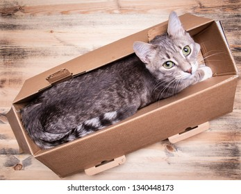 Cute, young cat with green eyes sits in a narrow box and calmly looks up, on a wooden background. Close-up.