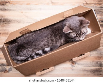 Cute, young cat sits in a narrow box and calmly looks away, on a wooden background. Close-up.