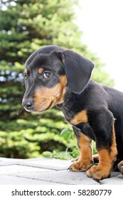 Cute young dog with beautiful expression in face