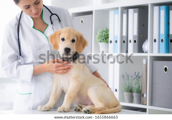 cute-young-dog-veterinarian-hands-600w-1