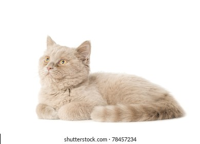 Cute young kitten lie on white looking sides
