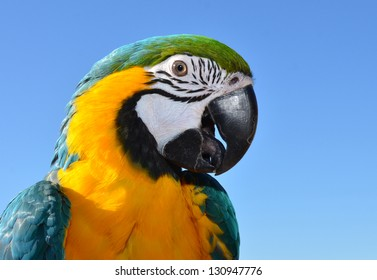 Cute Young Macaw