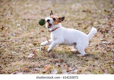 Cute young puppy playing with ball at spring lawn