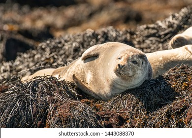 Cute young seal (sea calf) happily looking to the camera