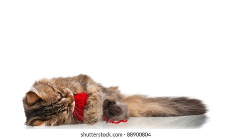 Cute young Siberian cat with red clew isolated on white background
