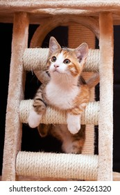 Cute young tabby cat on scratching post against black background