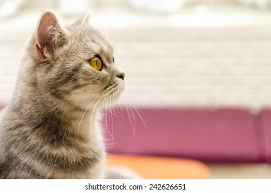 Cute young tabby shorthair on colorful background