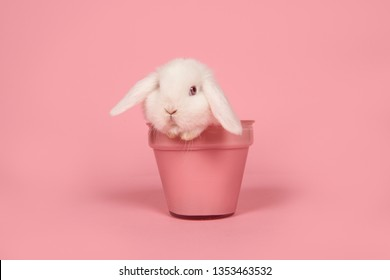 Cute young white rabbit in a pink flowerpot on a pink background