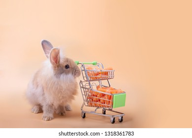 Cuterabbit with full of little carots in the shopping cart on the light orange background.