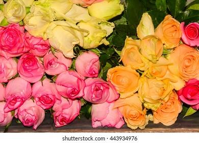 Cut-flower roses mix color.