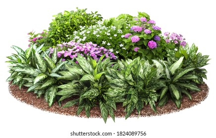 Cutout flower bed. Garden design isolated on white background. Flowering shrub and green plants for landscaping. Decorative hedge. High quality clipping mask. - Shutterstock ID 1824089756