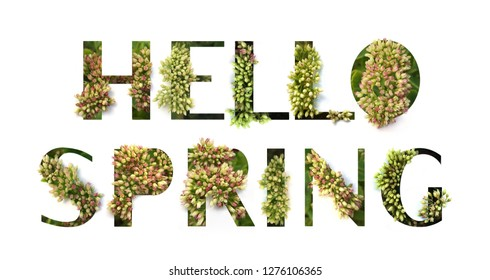 Cutout quote Hello Spring with growing plant inside. Poster concept.