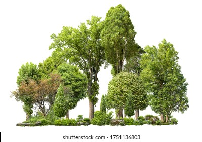 Cutout tree line. Forest and green foliage in summer. Row of trees and shrubs isolated on white background. Forest scape. High quality clipping mask .