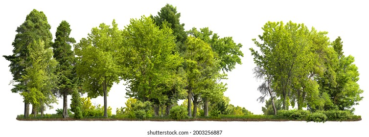 Cutout tree line. Row of green trees and shrubs in summer isolated on white background. Forestscape. High quality clipping mask. Forest and green foliage.