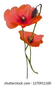 Cutouts of poppies