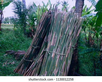 Cuts Of Bamboo Tree Trunks In The Plant Field