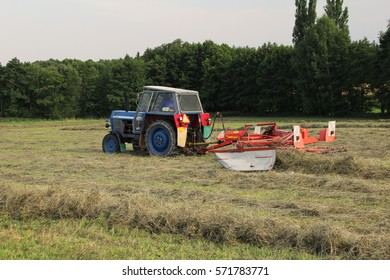 Cutted grass on meadow being raked into rows for baling, straw used for feeding, bio agriculture, cold autumn day, back perspective