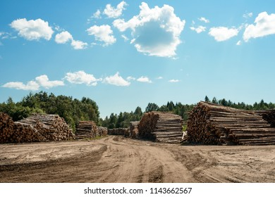 A lot of cutted logs on stockpile. Lumber industry. Logging and wood storage. Woodworking industry