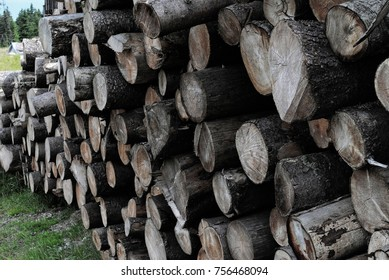 Cutted tree logs near sawmill. Close up view of wood on ground outdoors. Texture or background.
