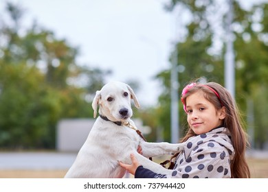 A cuttie dog playing with owner outdoors. Animal concept.