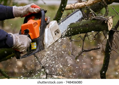 Cutting of the branch with a chainsaw